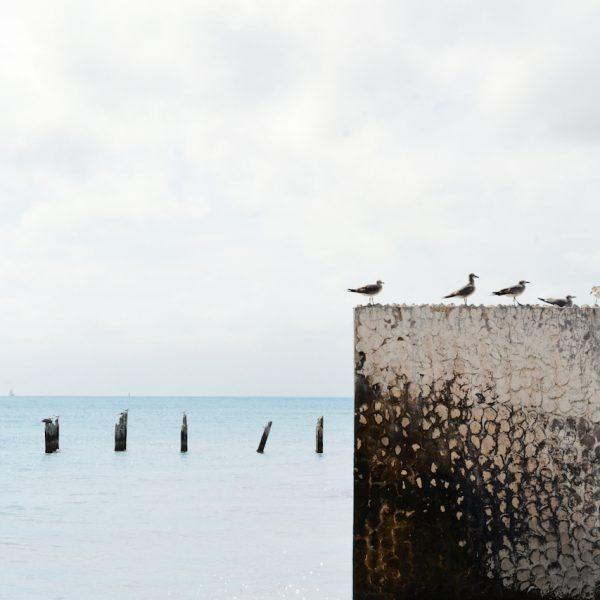 Gulls in a row Jill Heyer