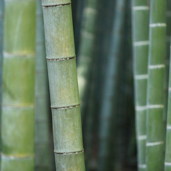 kazuend Bamboo